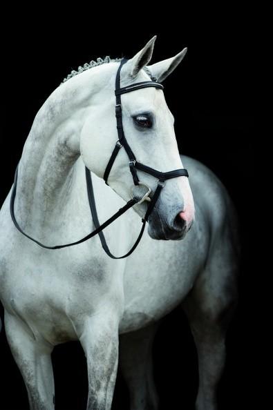 Rambo Micklem Diamante Competition Bridle Horseware