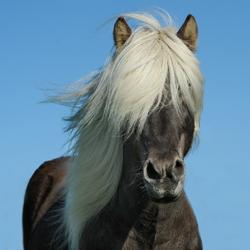 pretty_pony