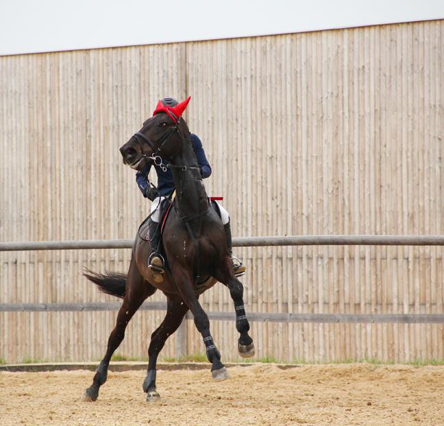 horse_rearing