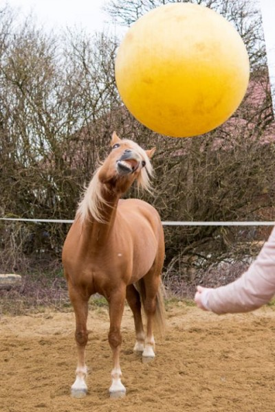 Aktion mit dem Maximus Spielball
