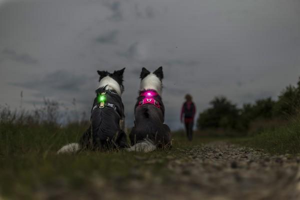 Sicherheitslicht Dog Dual Orbiloc