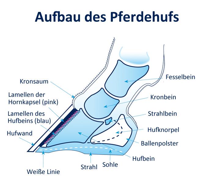 Lower-leg-and-foot-German_150