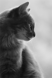 cat-367051_1920