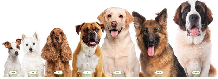 dog_rug_sizes1