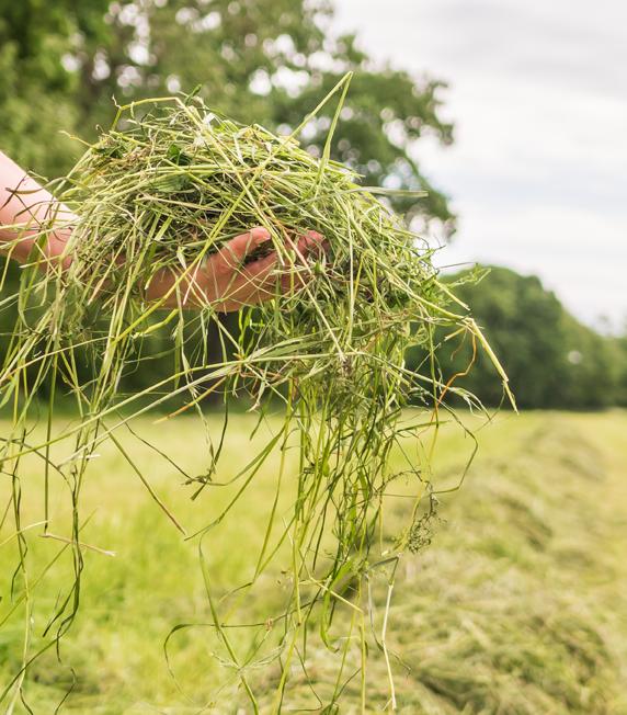 checking_hay